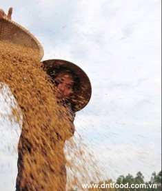 Philippines may buy more rice from Vietnam